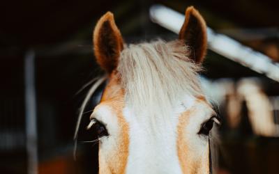 Witaj w świecie HorseShoe